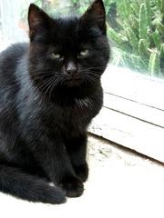 отдам в хорошие руки черного котенка
