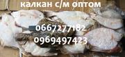 Калкан (камбала черноморская) оптом