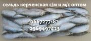 Сельдь керченская с/м и м/с оптом