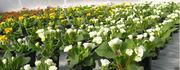 Растения на весну. Многолетние растения