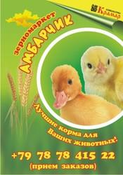 Продаю  цыплят  бройлера  суточных  (Венгрия) (Купить цыплят в Крыму)