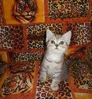 Продаются очаровательные плюшевые котята