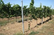 Столбики виноградные (Ж/Б) Б/У в хорошем состоянии.Опт и розница